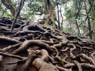 Creepy Roots, Guna caves