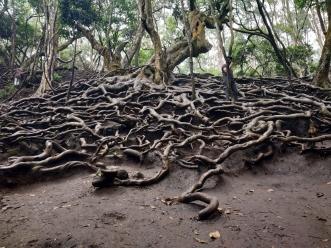 Eerie roots....