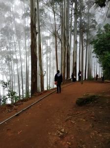 Splendor of eucalyptus