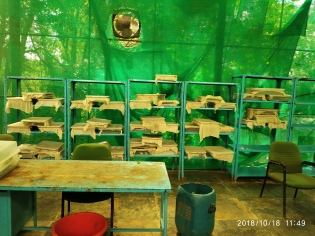 The butterfly rearing room